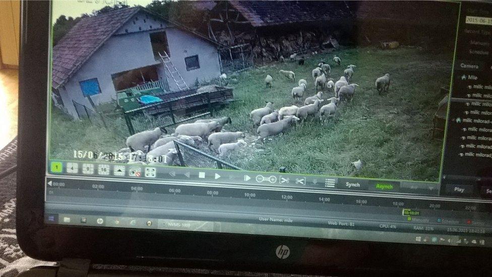 sajber pastir ovce video nadzor