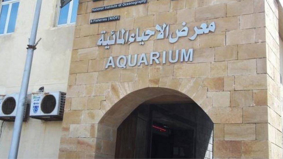 متحف الأحياء البحرية بالإسكندرية يحتفظ بسجل لأنواع الحيتان المنتشرة في البحر المتوسط