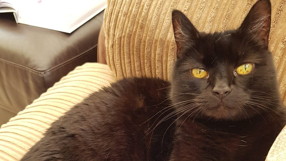 Cat missing for 10 years 'taken in by neighbour'