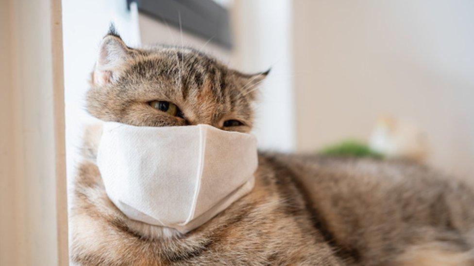 Научный дайджест: нежеланные гости в вашей кровати и почему кошке не страшен ковид