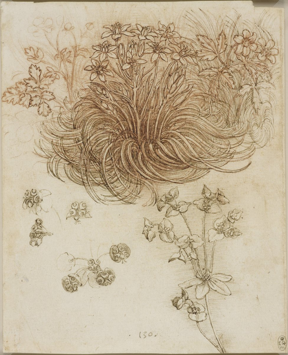 A drawing of a star-of-Bethlehem and other plants by Leonardo da Vinci