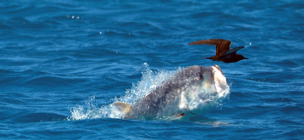 A giant trevally and a bird