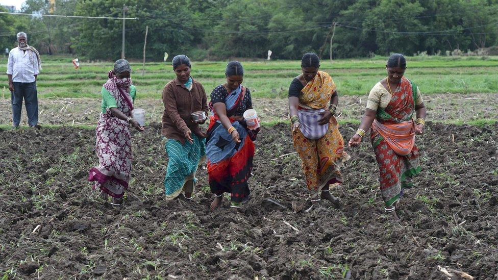 Mujeres sembrando en India