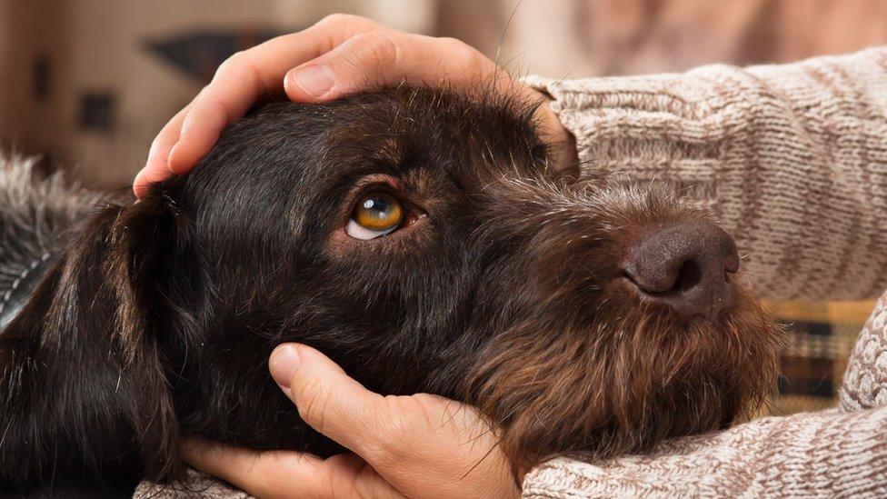 Acariciando a un perro