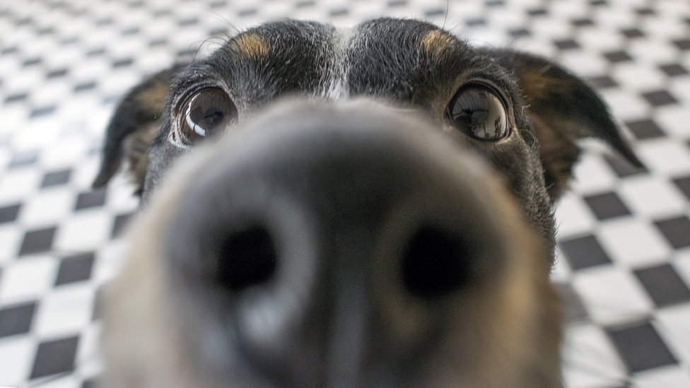 Display close distance from dog's nose.