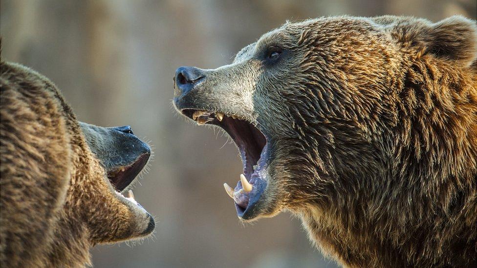 В китайском зоопарке медведи загрызли смотрителя на глазах у туристов