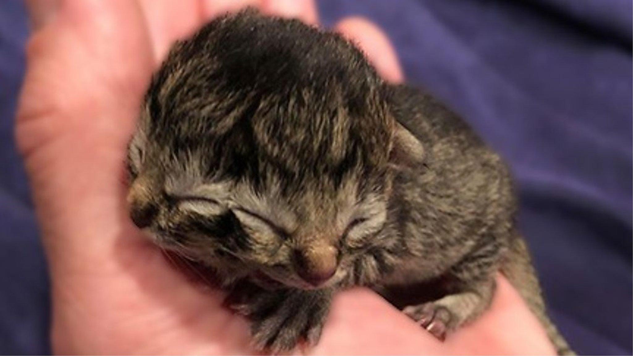 顔が2つある子猫が誕生 米オレゴン州 - BBCニュース