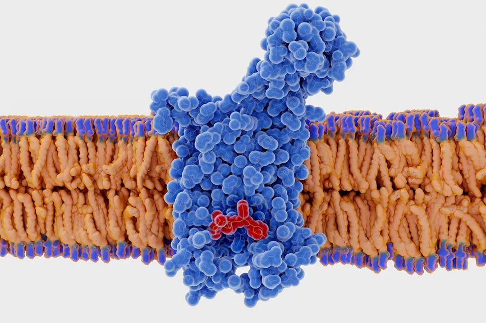 Imagen del gen CCR5