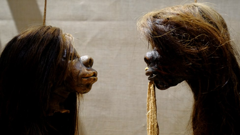 Shrunken heads on display