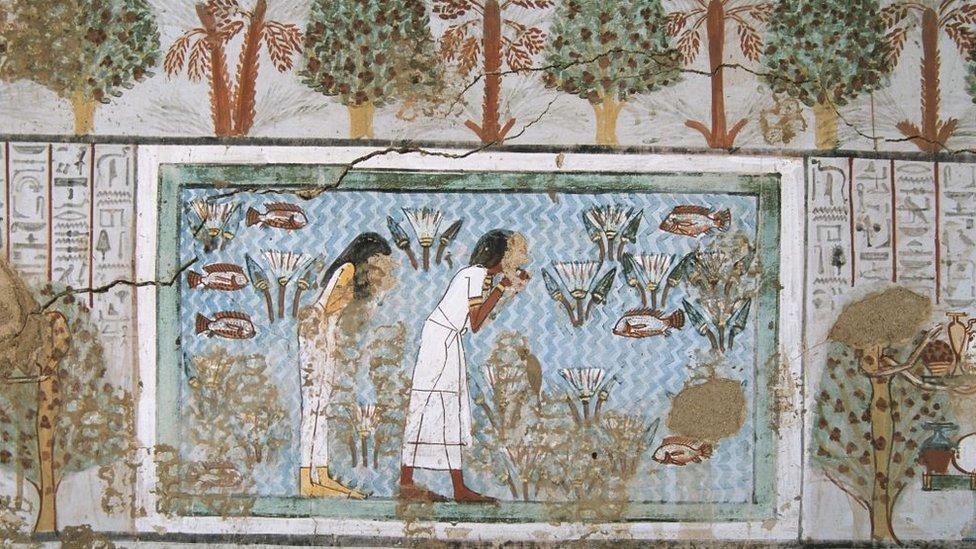مشهد لحقول زراعة النباتات العطرية