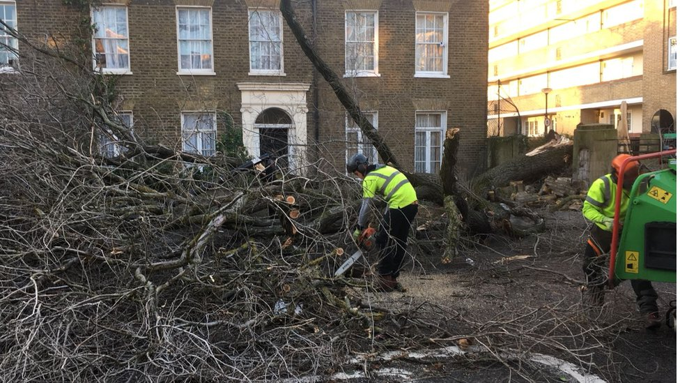 Man with chainsaw cuts up fallen tree