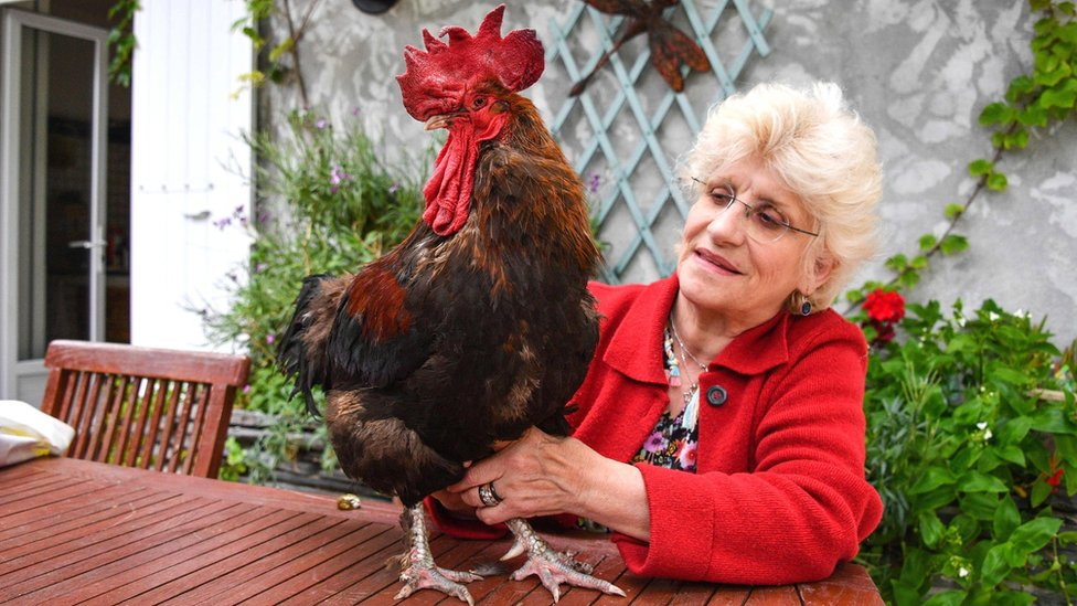 Corinne Fesseau with her rooster Maurice in her garden at Saint-Pierre-d'Oléron in La Rochelle, western France, 5 June 2019