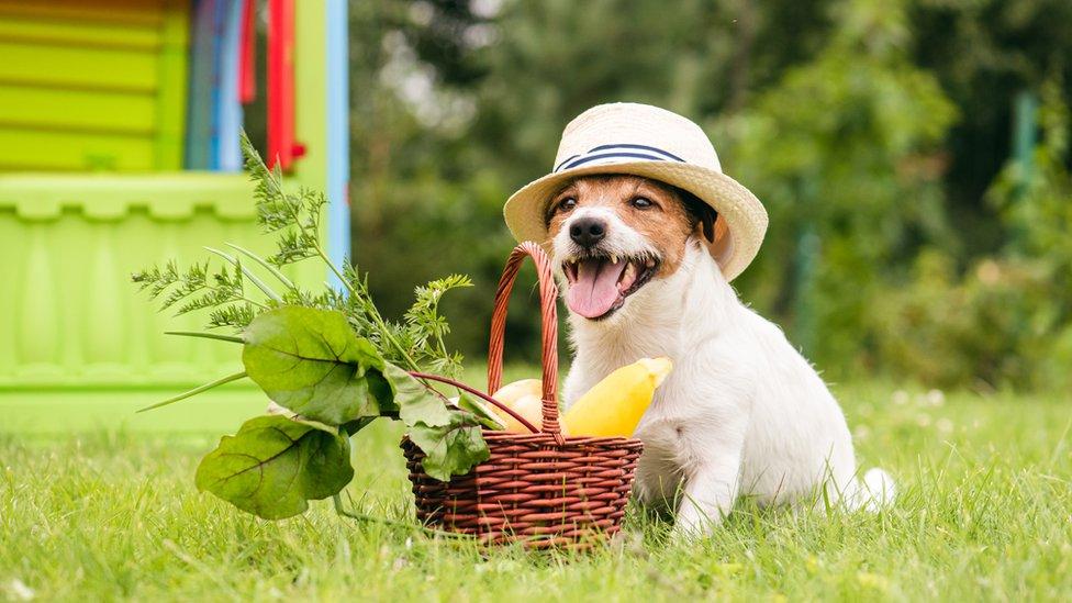 Perro con una cesta de vegetales.