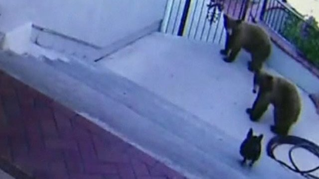 A dog chases ars out of her owner's back garden in Monroviad