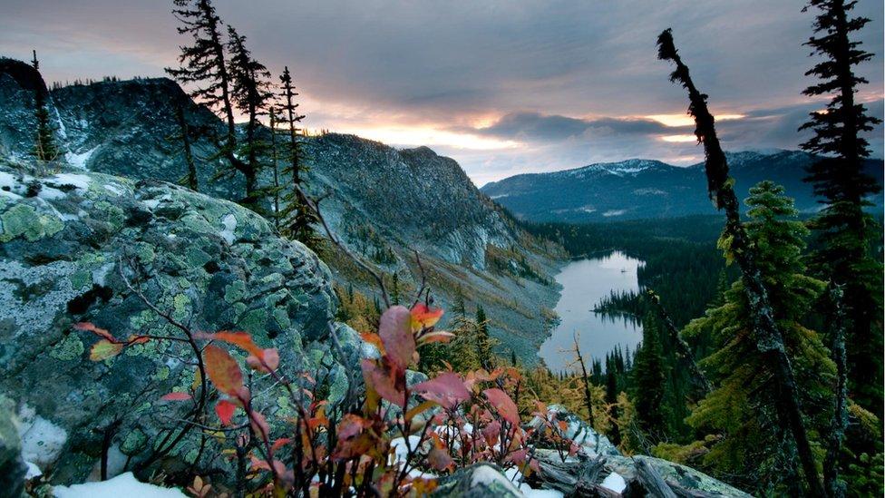 Darkwoods landscape