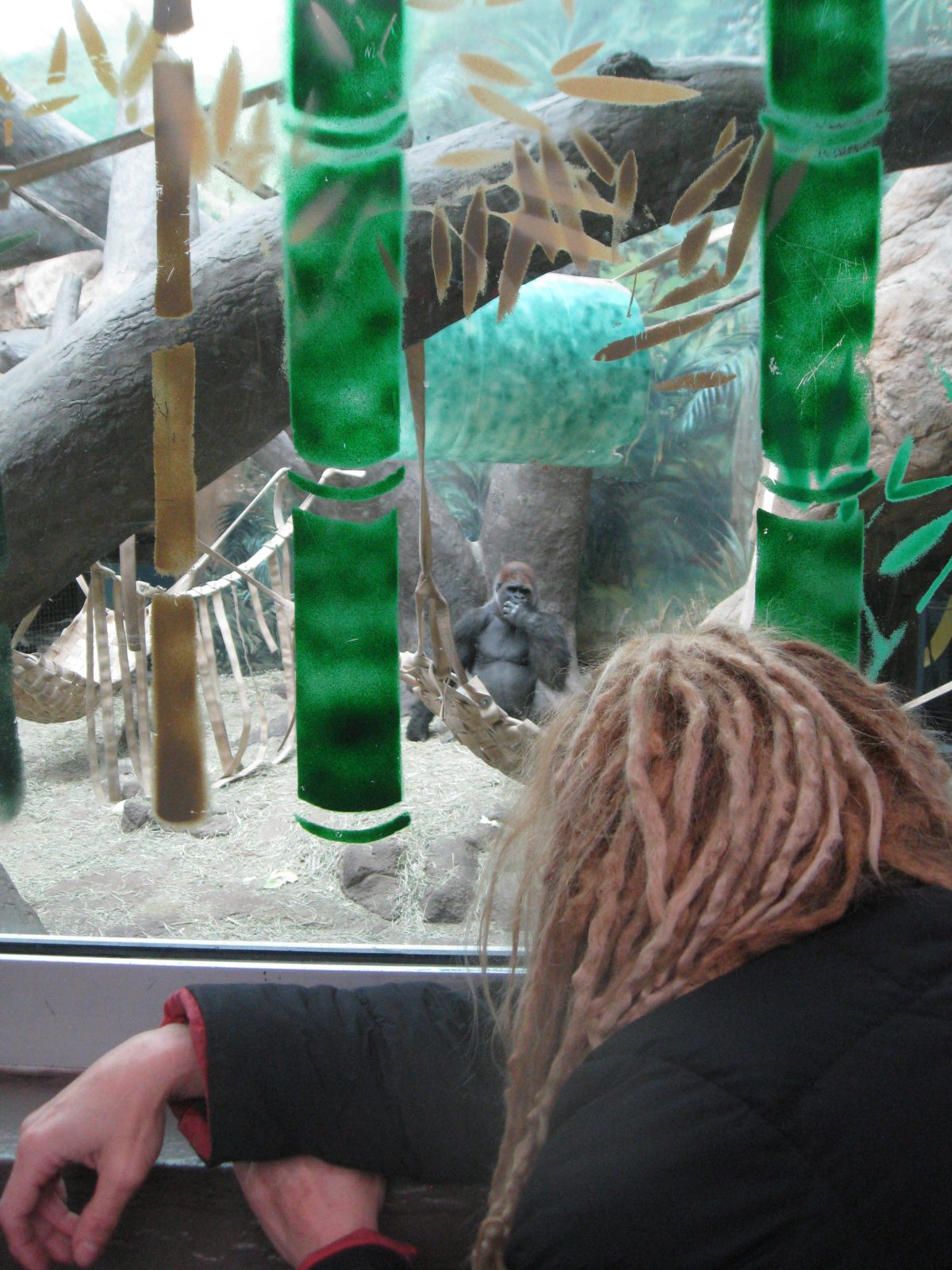 Dawn Prince-Hughes olha para um gorila