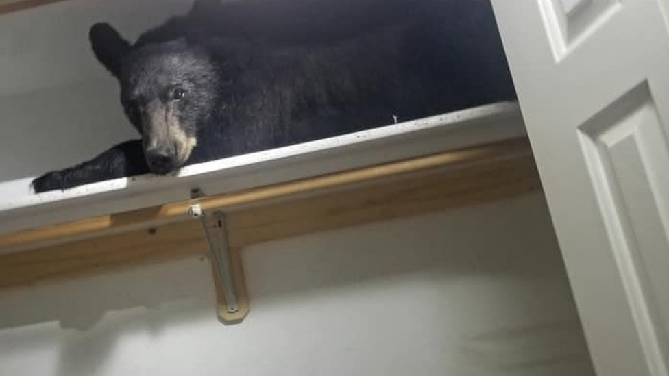 Bear sleeping in wardrobe