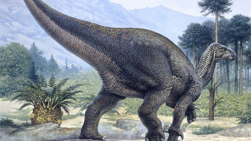 An iguanodon