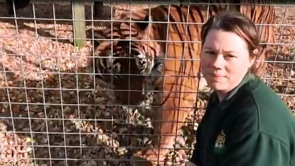 Zoo tiger death: Jury to hear Rosa King inquest