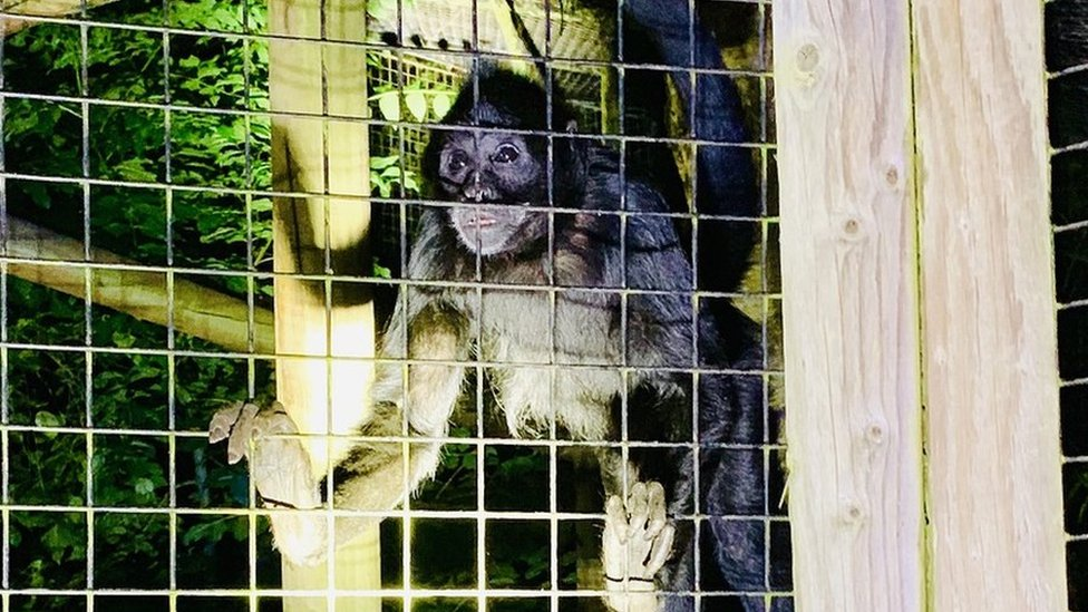 Monkeys saved after Birmingham nature reserve arson attack