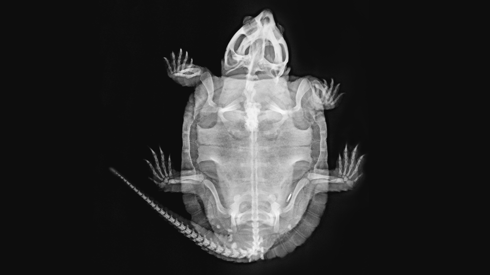 ZSL London Zoo shares animal X-rays