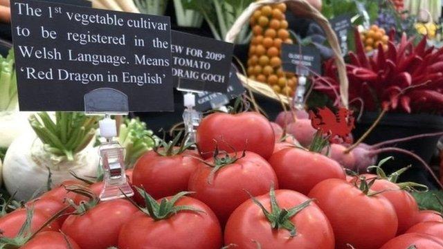 本地西紅柿