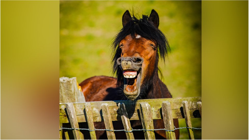 Daniel Szumilas photographed the horse in the United Kingdom