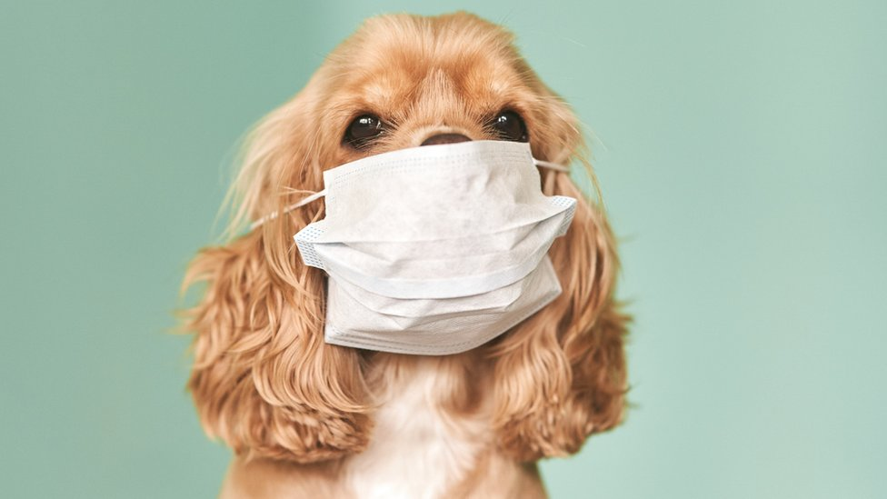 Dog in a medical mask