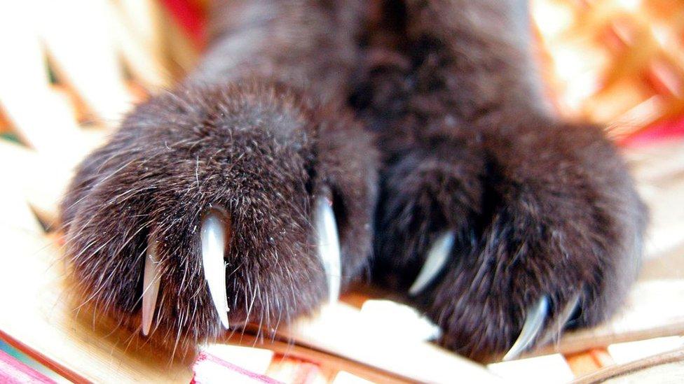 Garras de un gato