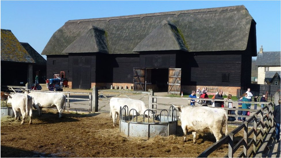 Wimpole Home Farm cattle