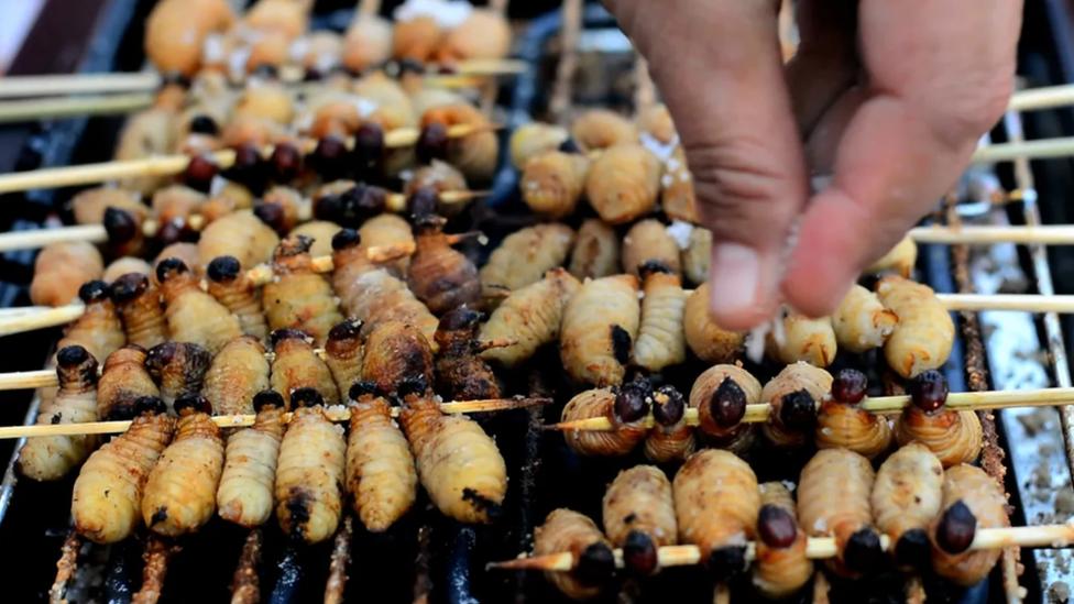 Comida hecha de insecto