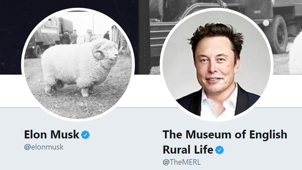 Tesla 'hires' witty museum sheep tweeter