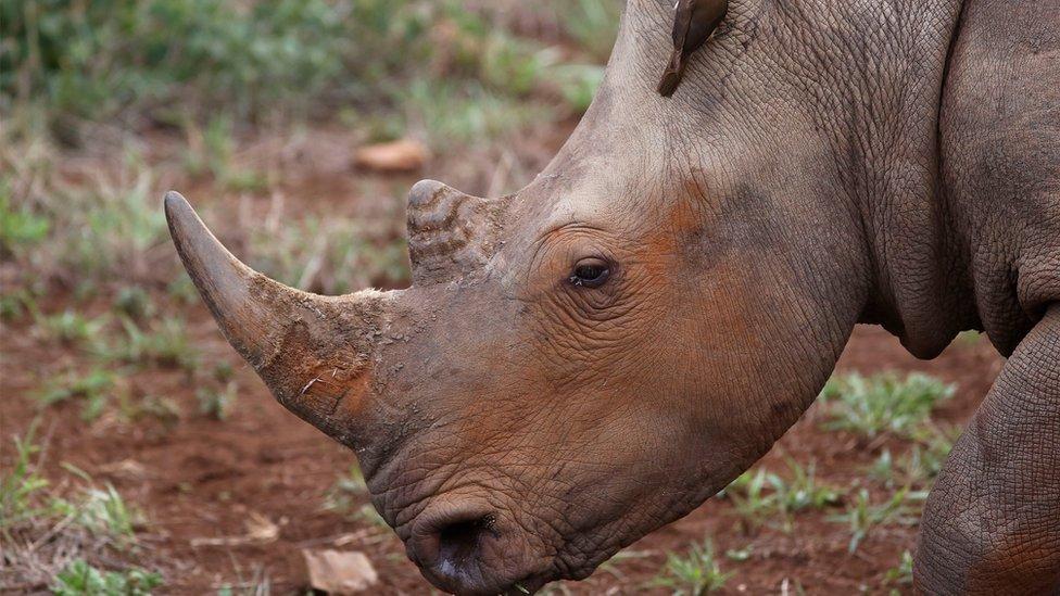 Rhino in Hluhluwe, South Africa