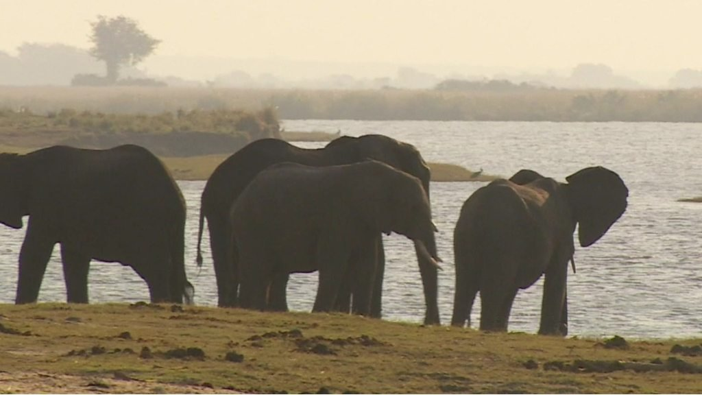Botswana's elephant hunting dilemma