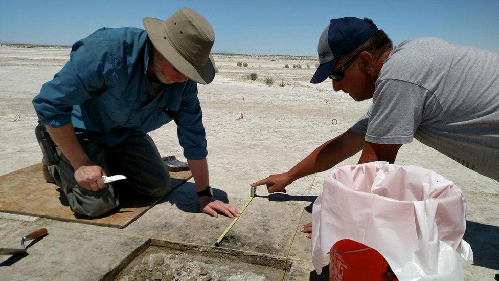 Arheolozi su semenke pronašli u pustinji Velikog slanog jezera