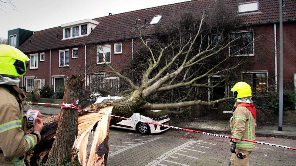 oboreno stablo ispred kuće u roterdamu