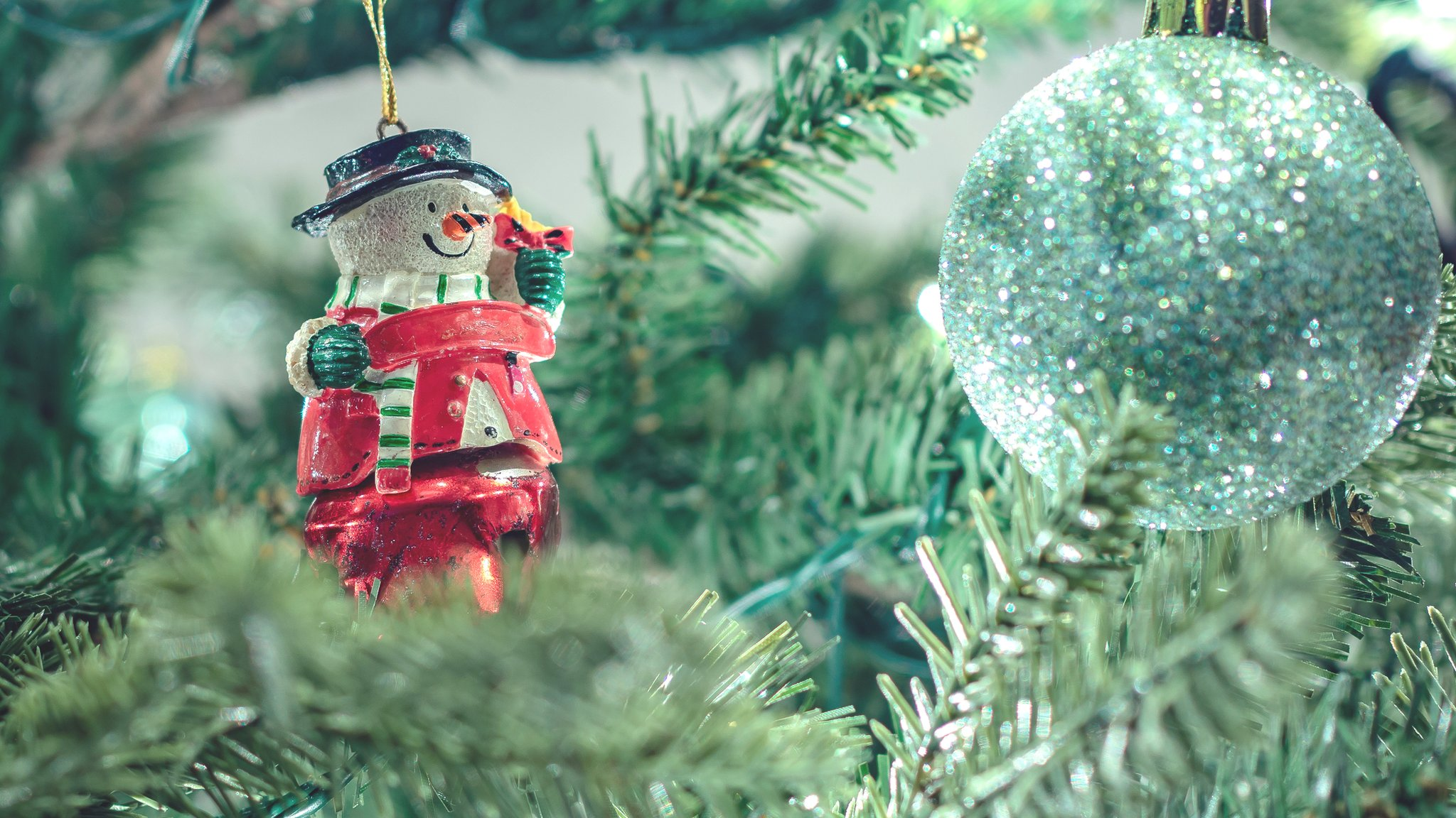 Як ваша різдвяна ялинка може врятувати планету