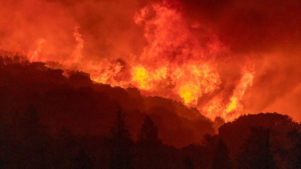 yanan ormanlar