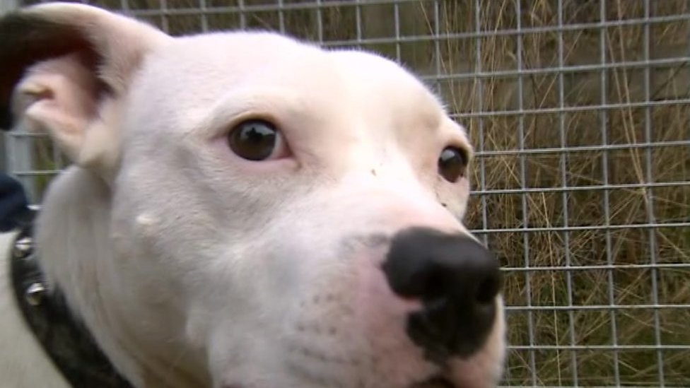 Abandoned dog Snoop settles into new life at RSPCA centre