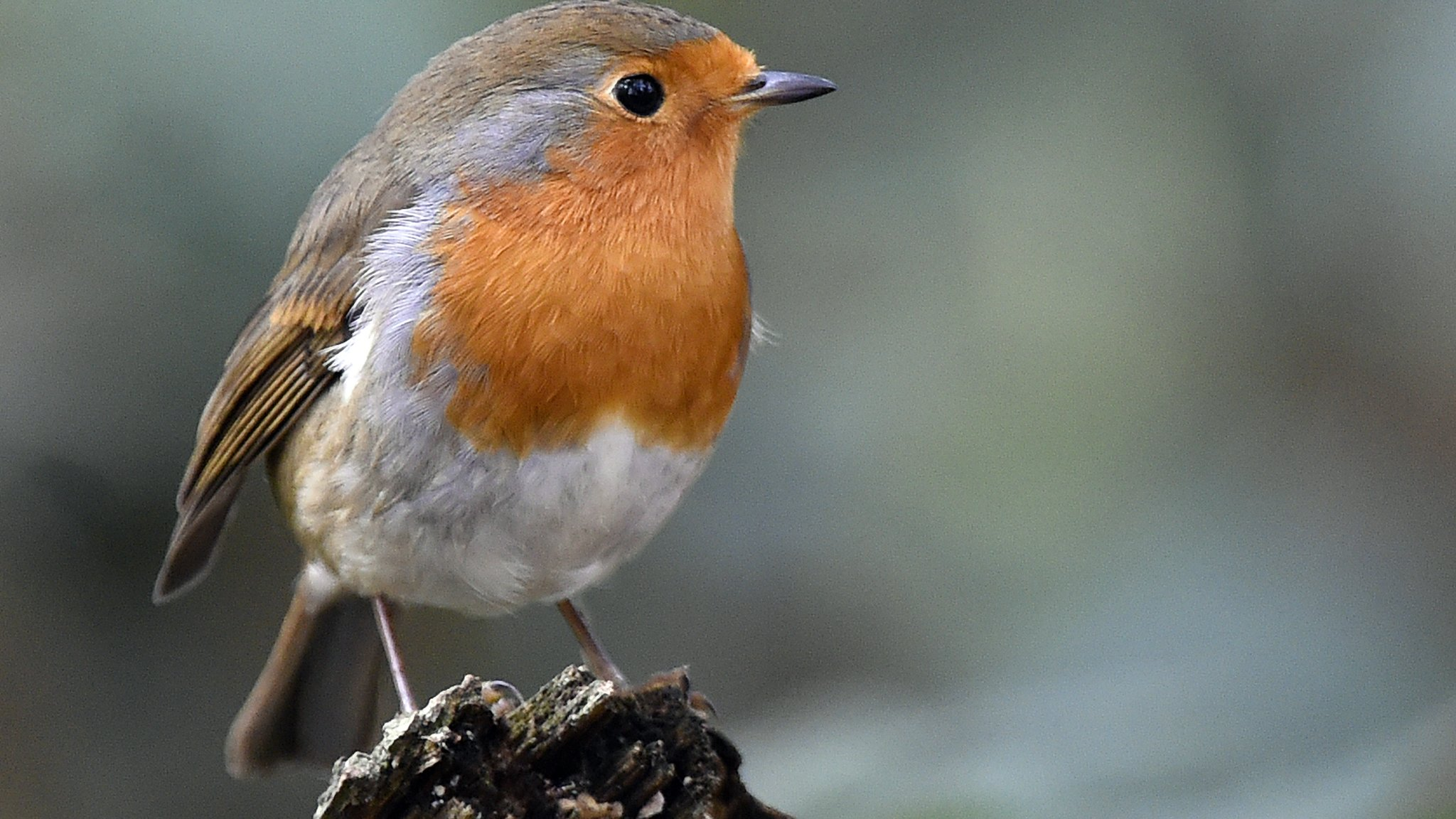 Think you know your EFL animal nicknames?