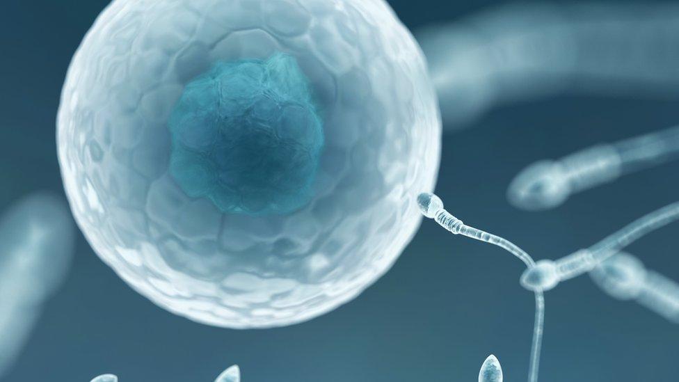 NHS told 'offer transgender fertility treatment' or face legal action