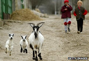 Rural scene in Moldova