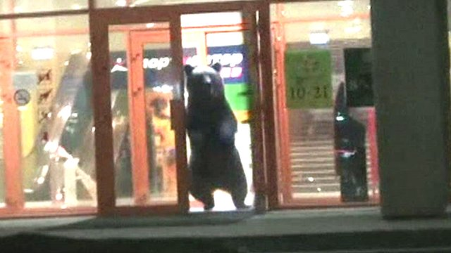 A bear escapes out of the door of a shopping mall