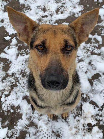 Un perro callejero con ojos tristes pide comida en la zona de exclusión.