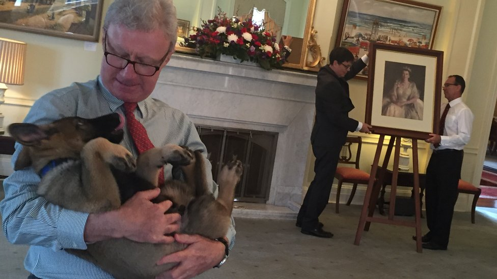 A candid photo from inside the governor's house, showing governor Paul de Jersey holding the puppy, as aides decorate a room for a function in the background