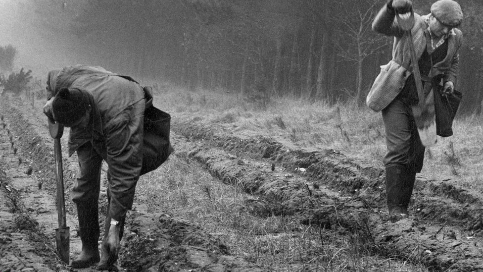 1919 - First trees planted at Eggesford Forest, Devon