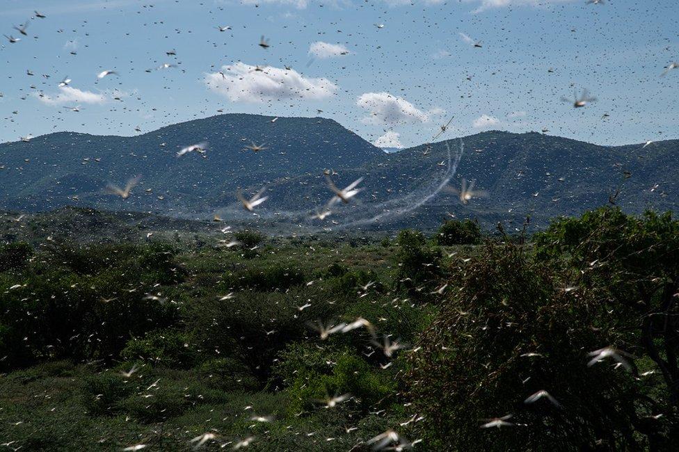 Locusts in the air