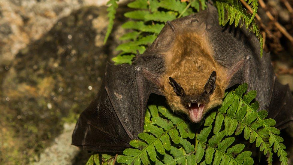 How bats keep an ear on their prey