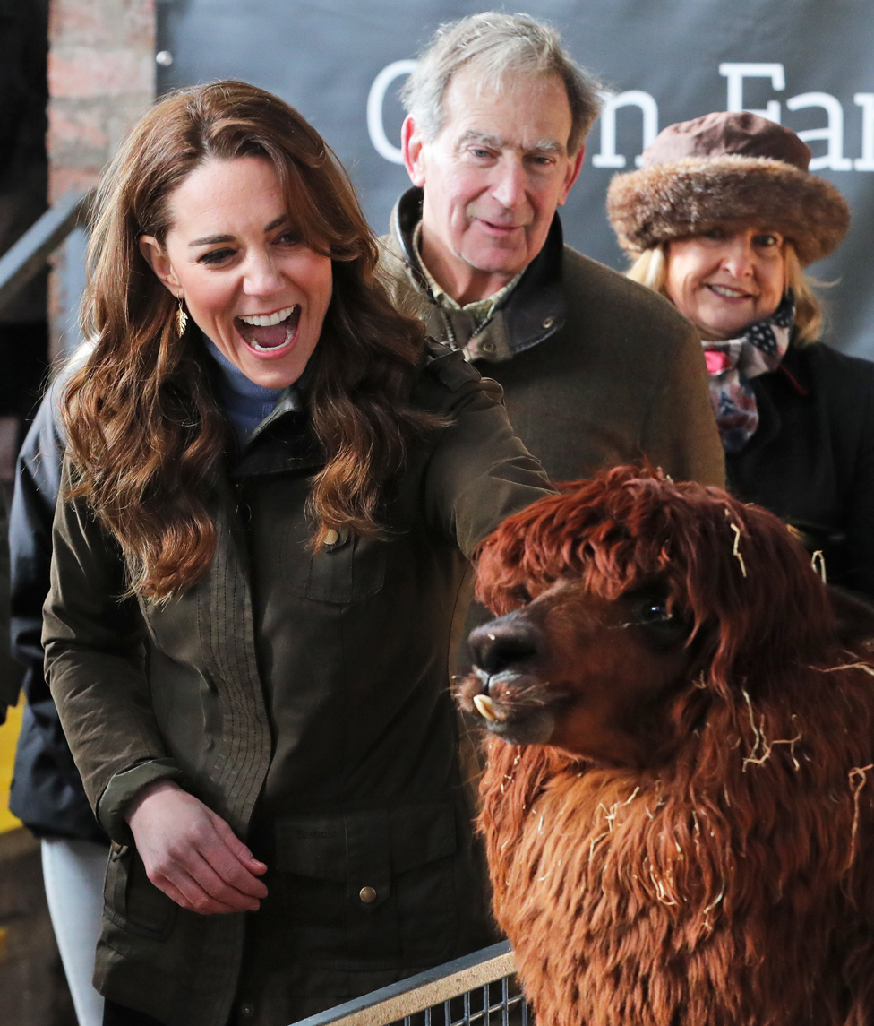 The Duchess of Cambridge stroking an alpaca during a visit to Northern Ireland