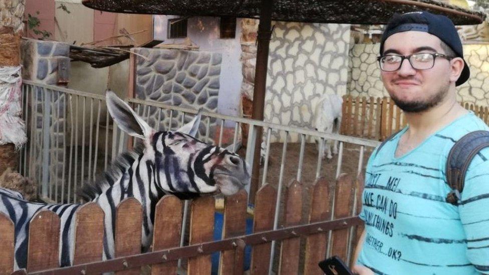Magareća zebra u Kairu